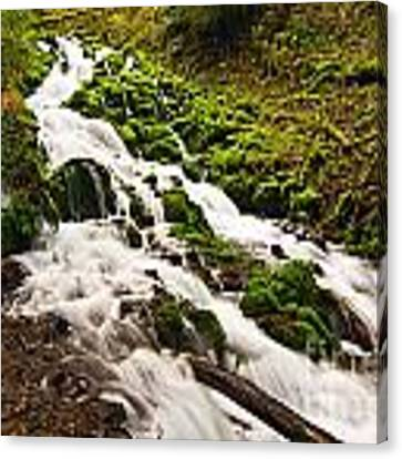 Mossy River Flowing. Canvas Print