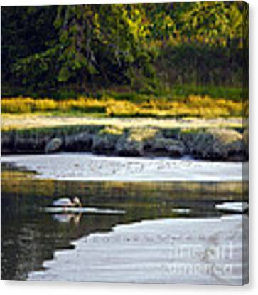 Mud Bay Heron 1 Canvas Print by Susan Parish