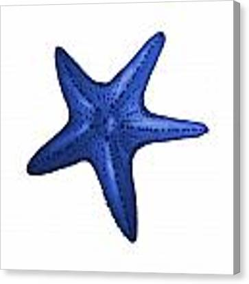 Nautical Blue Starfish Canvas Print by Michelle Eshleman