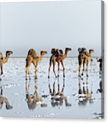 Reflections Of An Ancient Life Canvas Print by Trevor Cole