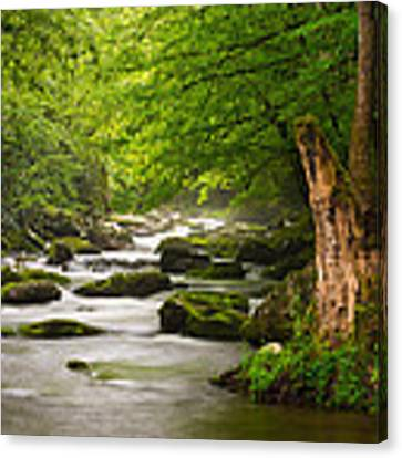 Smoky Mountains Solitude - Great Smoky Mountains National Park Canvas Print