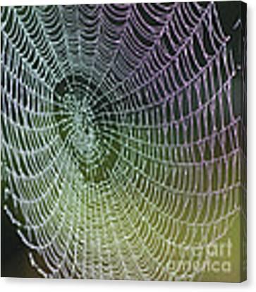 Spider Web Canvas Print by Heiko Koehrer-Wagner
