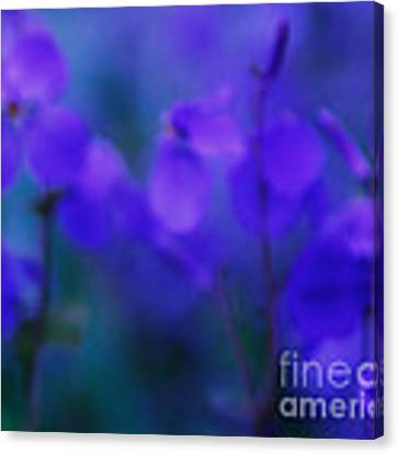 Spring Purfume Canvas Print by Julian Cook