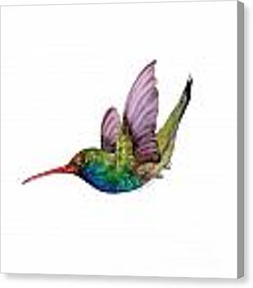 Swooping Broad Billed Hummingbird Canvas Print by Amy Kirkpatrick