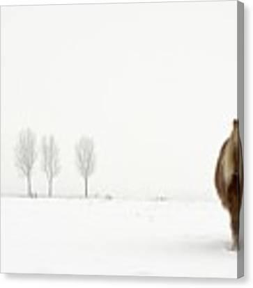 The Cold Pony Canvas Print by Gert Van Den