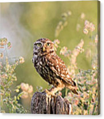The Little Owl Canvas Print