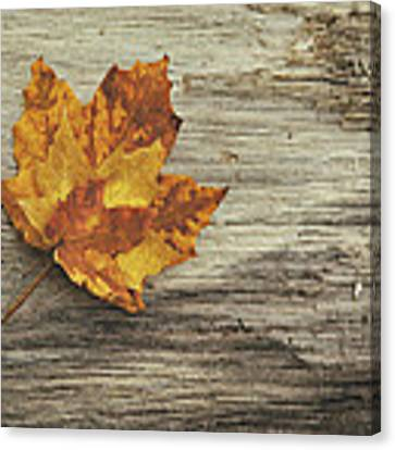 Three Leaves Canvas Print by Scott Norris