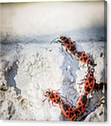 Une Ascension Difficile . Hard Climbing  Canvas Print by Stwayne Keubrick