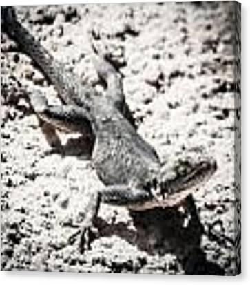 Weird Lizard Canvas Print by Stwayne Keubrick