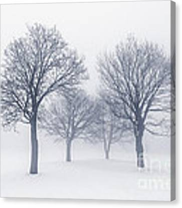 Winter Trees In Fog Canvas Print
