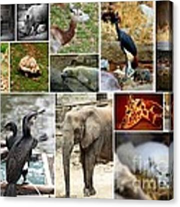 Zoo Collage Canvas Print by Patti Whitten