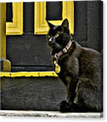 Black Cat Yellow Trim Canvas Print by Williams-Cairns Photography LLC