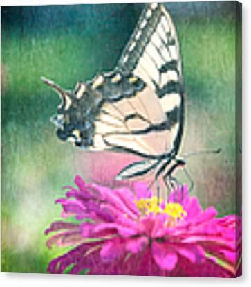 Butterfly Canvas Print by Kim Fearheiley