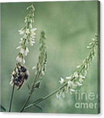 Collecting The Summer Canvas Print