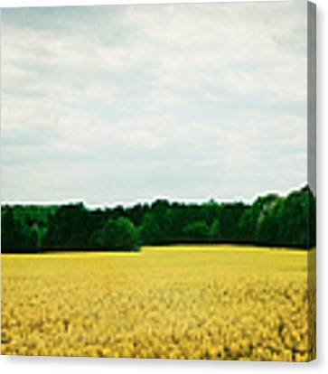 Field Of Yellow Wildflowers Canvas Print