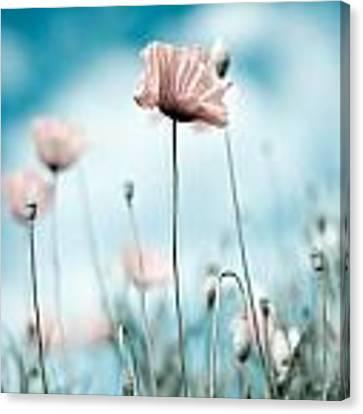 Poppy Flowers 10 Canvas Print