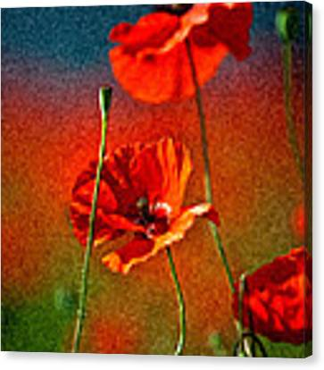 Red Poppy Flowers 08 Canvas Print
