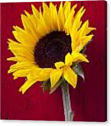 Sunflower Against Red Wooden Wall Canvas Print by Garry Gay