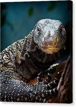 Canvas Print featuring the photograph  A Crocodile Monitor Portrait by Lana Trussell