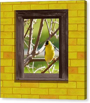 American Goldfinch Canvas Print by Art Spectrum