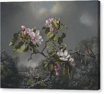 Apple Blossoms And Hummingbird Canvas Print by Martin Johnson Heade