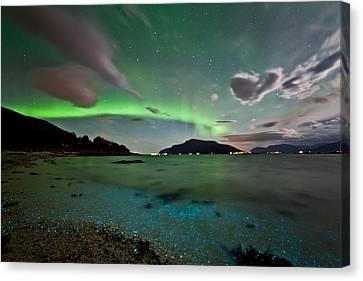 Auroras And Dinoflagellates Canvas Print