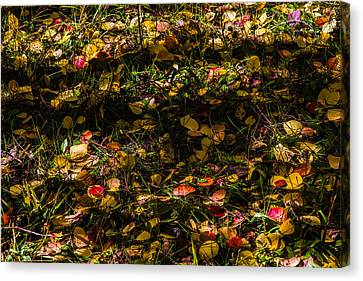 Autumn's Mosaic Canvas Print