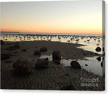 Beach Rocks Barnacles And Birds Canvas Print