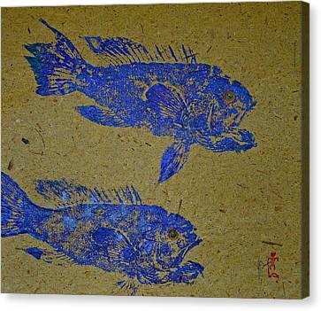 Black Sea Bass - Rockfish Canvas Print