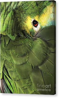Bluefronted Amazon Parrot Canvas Print by Neil Overy