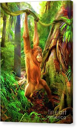 Borneo Baby Canvas Print by Trudi Simmonds