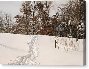 Christmas Snow Trail Canvas Print