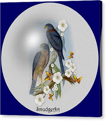 Collared Sparrow Hawk Canvas Print by Madeline  Allen - SmudgeArt