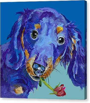 Dach Canvas Print by Pat Saunders-White