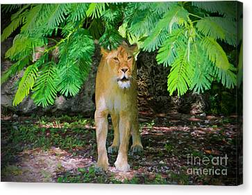 Emerging From The Shadows Canvas Print by Judy Kay