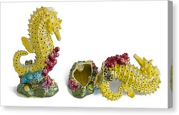 Fish Sea Horse - Metal  Box For Jewelry Canvas Print