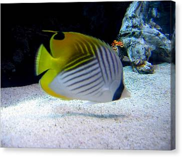 Canvas Print featuring the photograph  Fish by Suhas Tavkar