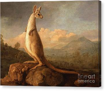 Long Tail Forest Canvas Print by MotionAge Designs