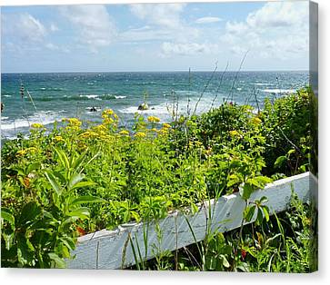 Manomet Point Canvas Print by Janice Drew