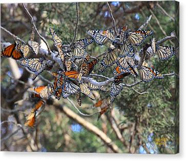 Monarch Mixed Cluster Canvas Print
