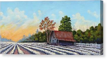 Montmorenci Cottonfield Canvas Print