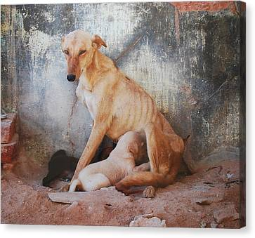 Mother's Love Canvas Print by Dorota Nowak
