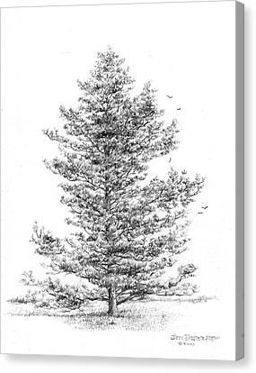 Pine Canvas Print by Jim Hubbard