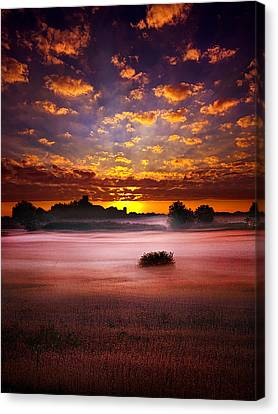 Natur Canvas Print -  Quiescent  by Phil Koch