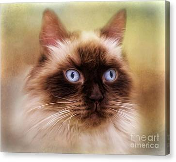 Canvas Print featuring the digital art  Ragdoll Cat by Trudi Simmonds