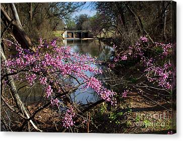 Redbuds And A Distant Bridge Canvas Print