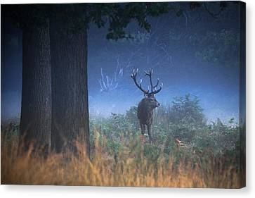 Red Deer Canvas Print -  Richmond Park Stag by Ian Hufton