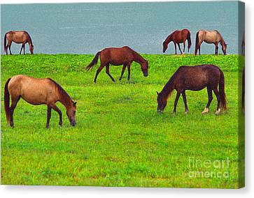 Seaside Grazing Canvas Print by Thomas R Fletcher
