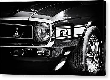 Shelby Gt350 Canvas Print by Tim Gainey