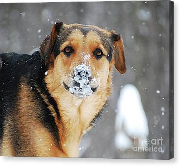 Canvas Print featuring the photograph  Snow Smile  by Lila Fisher-Wenzel